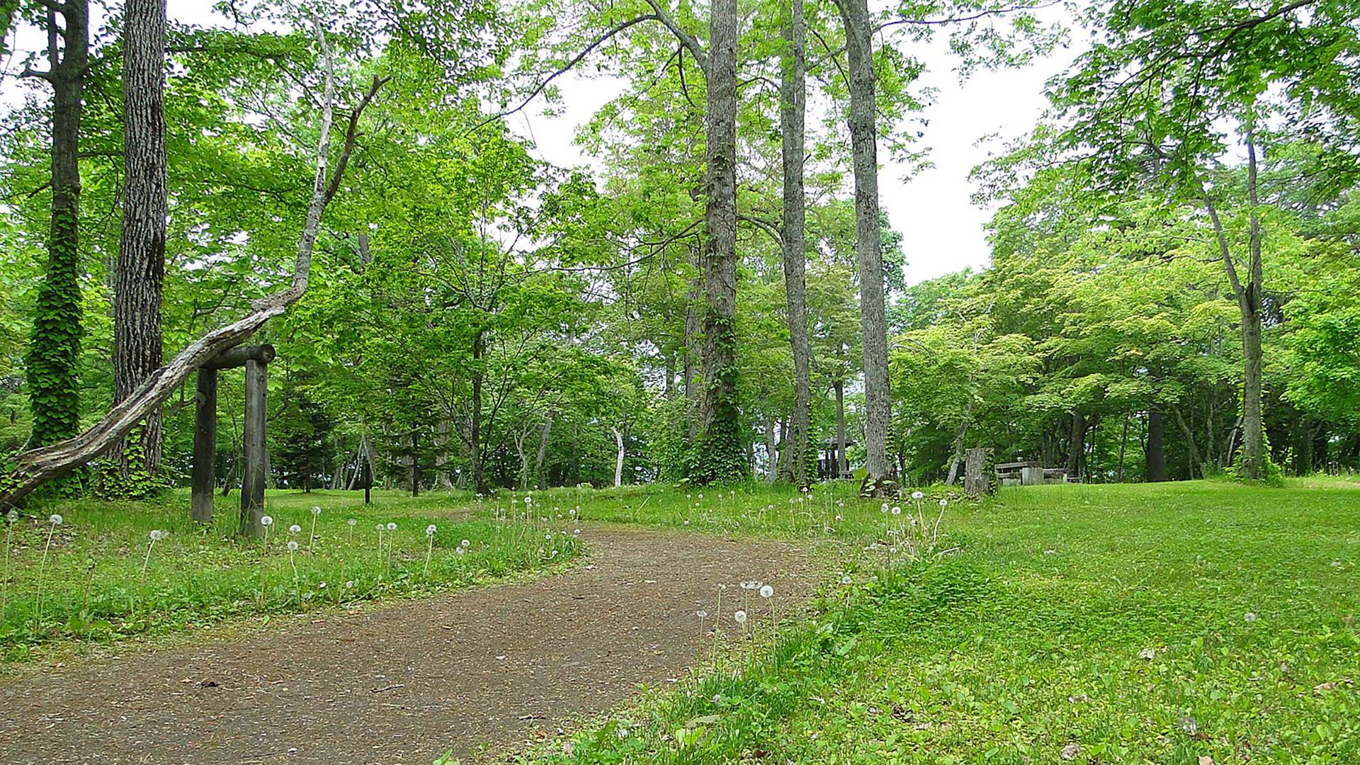 公園のバーチャル背景画像です